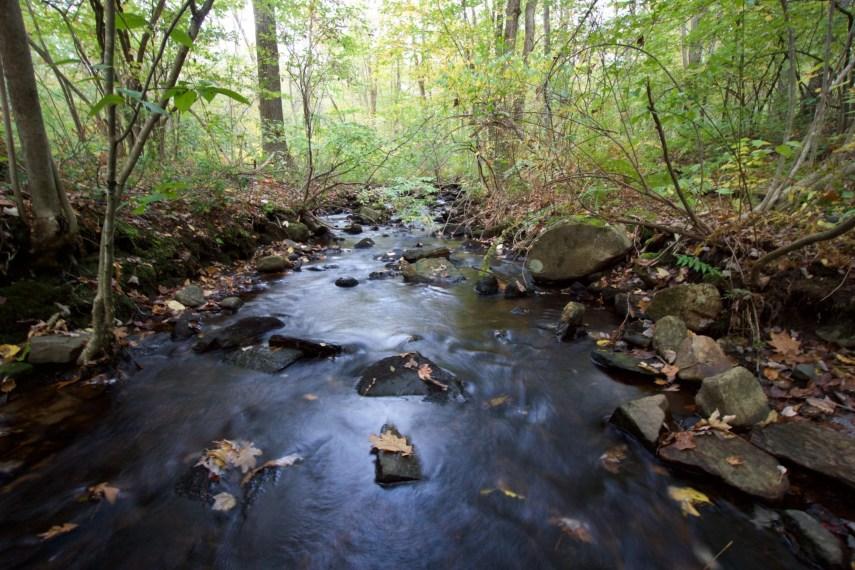 Stream into Risley Pond