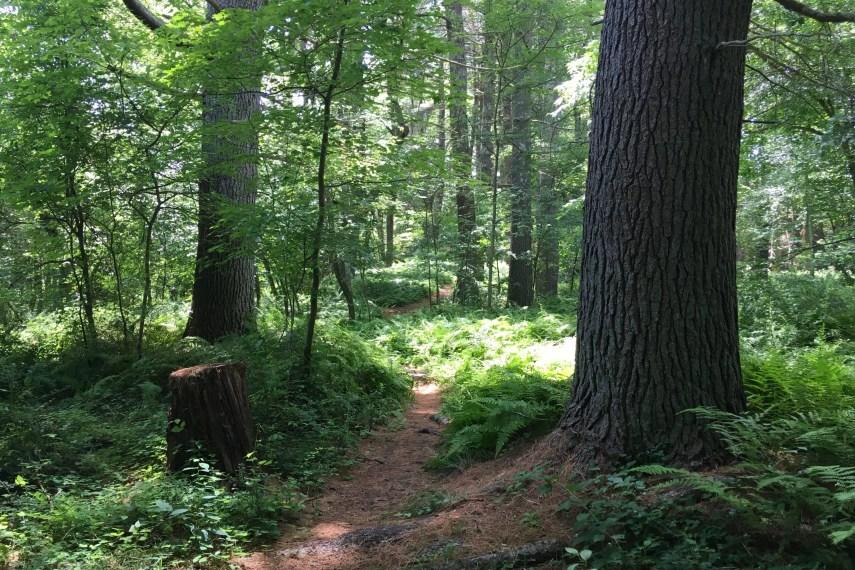 Becker Trailview
