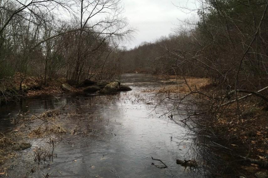 Rankin Preserve Ponds