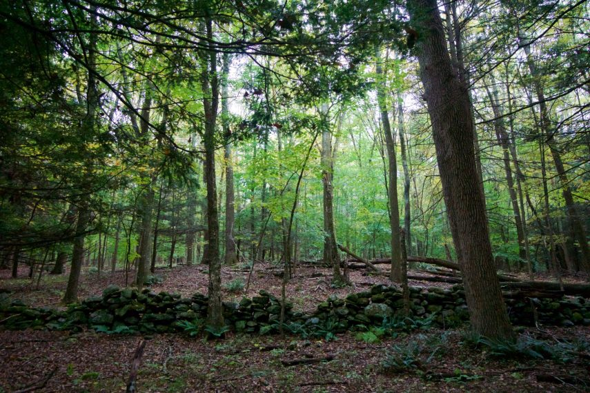 Couch Preserve Trailview