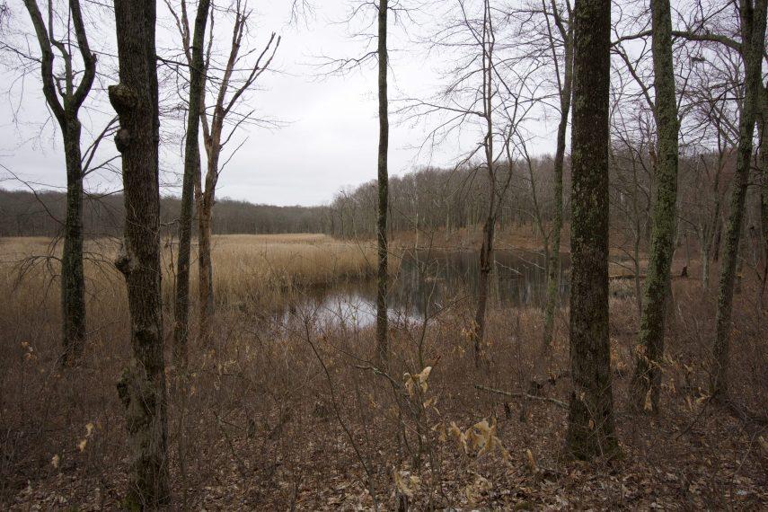 Friedman Forest Marsh