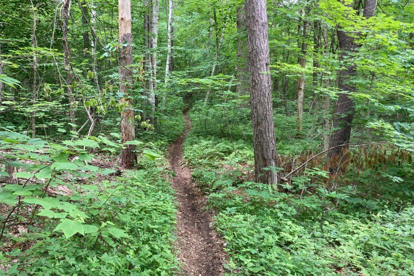 Bear Den Mountain Bike Trail