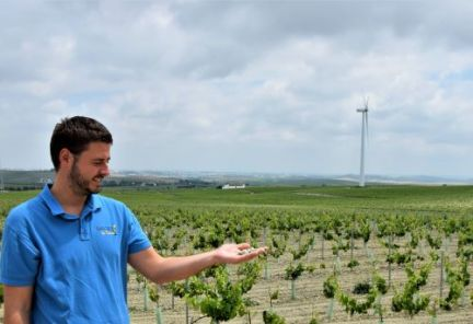 Albariza y uvas palomino para ruta definitiva del Jerez explore la tierra Jerez de la Frontera sherry tour