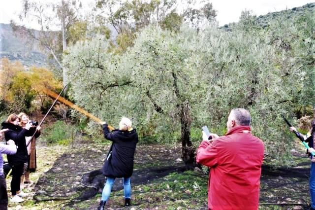 Olive oil tour vareo in Zahara de la Sierra