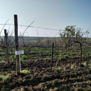 Tintilla de rota vineyard private tour Cadiz Vejer de la Frontera