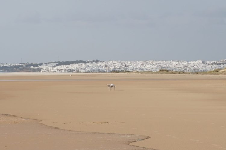 Explore la Tierra hikes in Conil de la frontera vista playa Cadiz