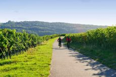 Tour operadores España cata de vino pennedes