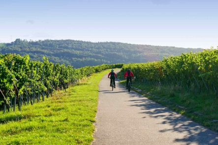 wine-tour-penedes-self-guided tour operator in Spain