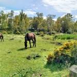 Ruta senderismo en el parque natural del Estrecho silla del papa guía