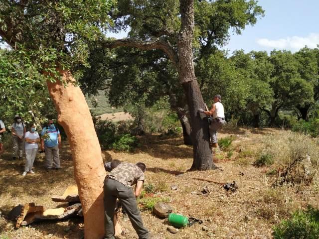Extraccion del corcho alcornoque tour Los Alcornocales natural park Cadiz