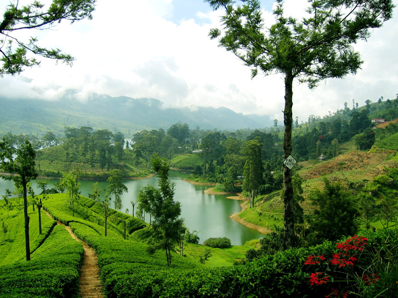 Image result for Nuwara Eliya