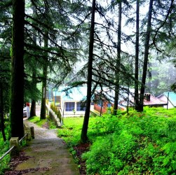Attraction around Chail