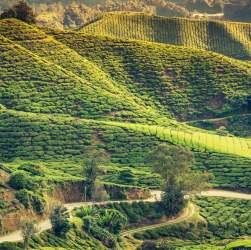 Attraction points of Darjeeling
