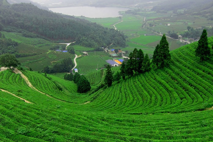 Tourist attraction nearby Coonoor