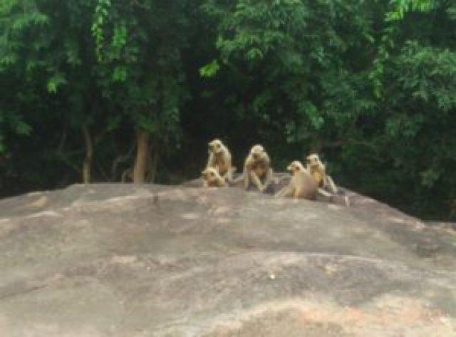 Udayagiri hill near Bhubaneswar