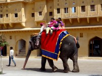 Visitors enjoying elephant ride at Amer Fort