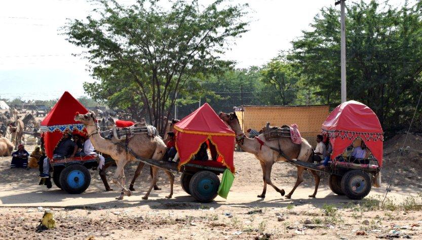 Pushkar camel festival complete visitors guide india
