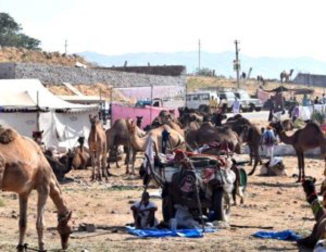 Camel merchant at Pushkar fair