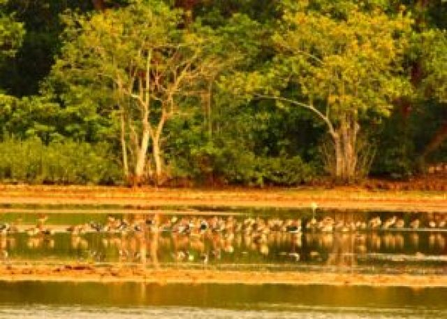 Bhitarkanika wildlife & bird sanctuary