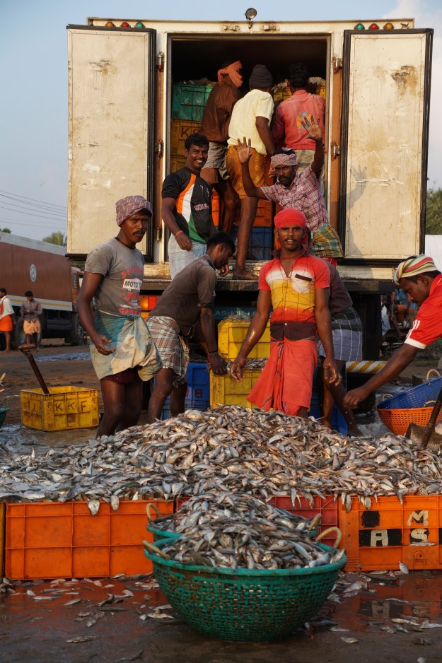 1. Sebastian Croos sets his nets off the coast of Mannar Island in northern Sri Lanka. / 2. Workers load oil sardines from the night's catch onto trucks at Rameswaram jetty. On Sunday, Tuesday, and Thursday mornings when the trawlers come in, as many as 70 trucks will load up at the harbor.