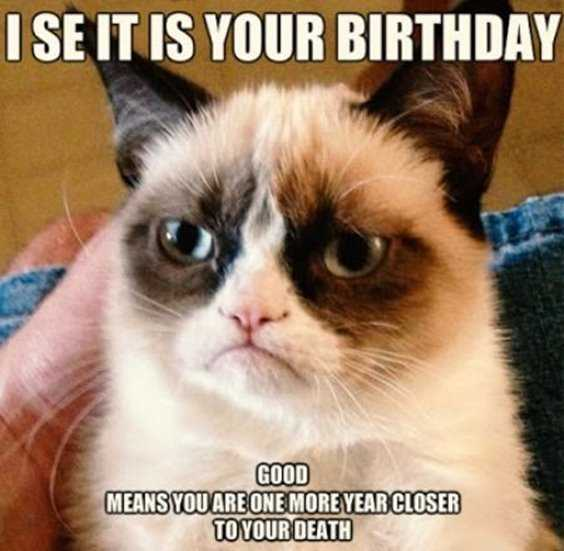 32 Best Funny Birthday Pictures Funny Birthday Quotes 12