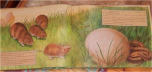 livre jeunesse présentant les champignons comestibles ou toxiques