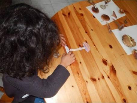 puzzle champignon botanique inspiration Montessori