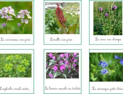 fleurs des champs cartes de nomenclature montessori