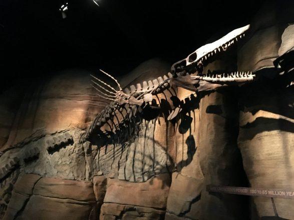 Aquarium fossil