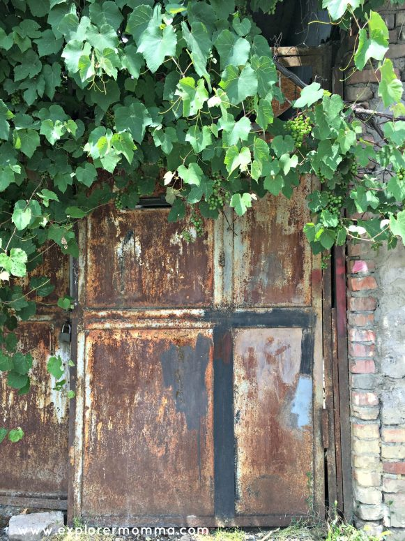 Door with grapevines