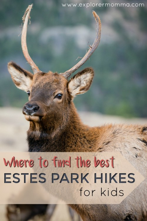 Estes Park hikes for kids elk pin