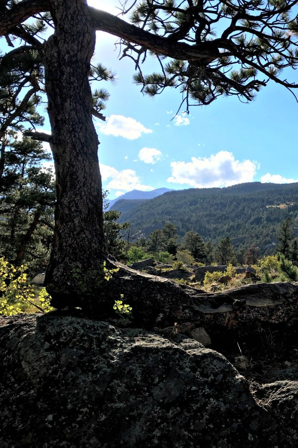 Rocky Mountain National Park tree view