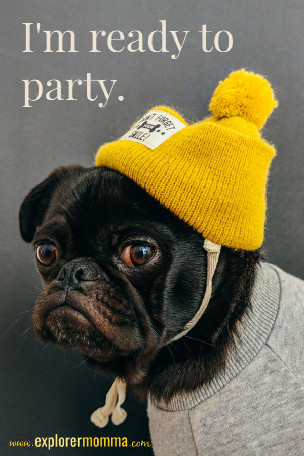 Pug in a yellow hat is ready to go to the Explorer Momma blog party #blogparty #pugsparty