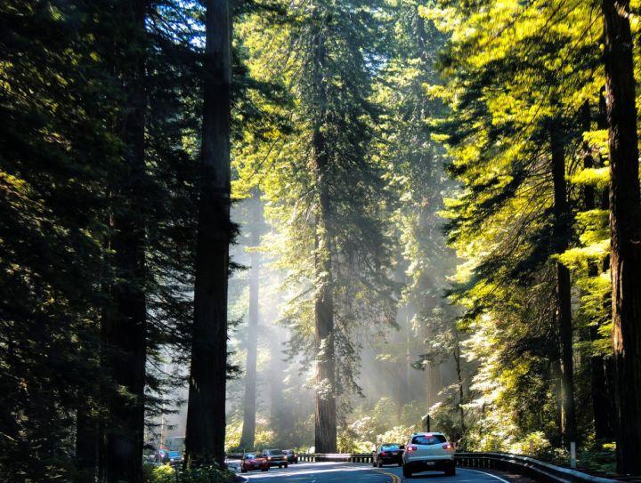Redwood National Park, line of cars #californianationalparks #bucketlist