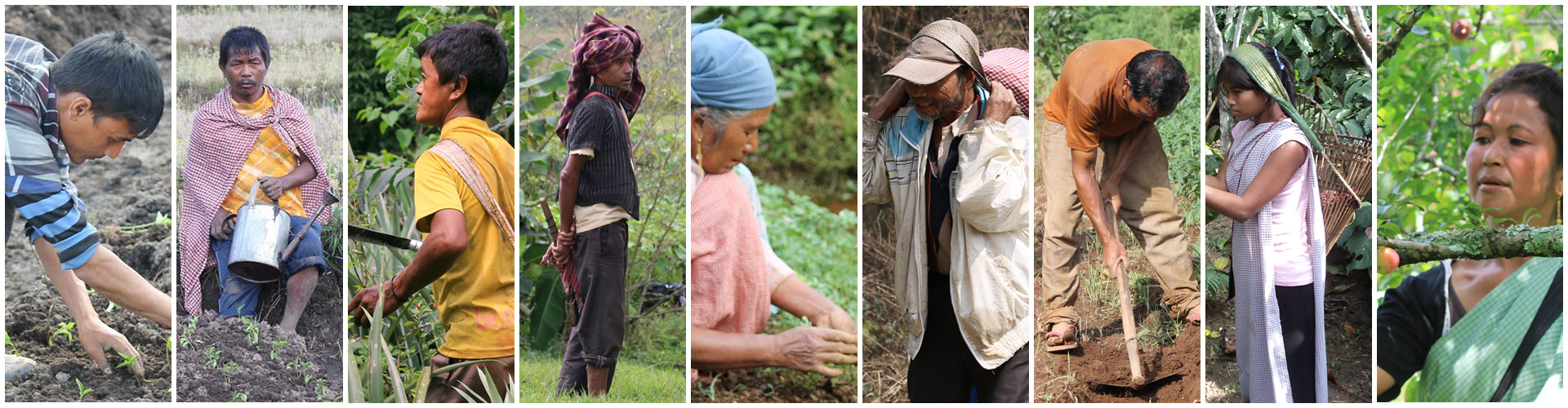An Agri-Business Consortium to the Help of Small Farmers of Meghalaya