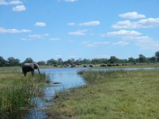 Elephant crossing the spillway