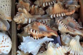 Shells for sale at La Camisa