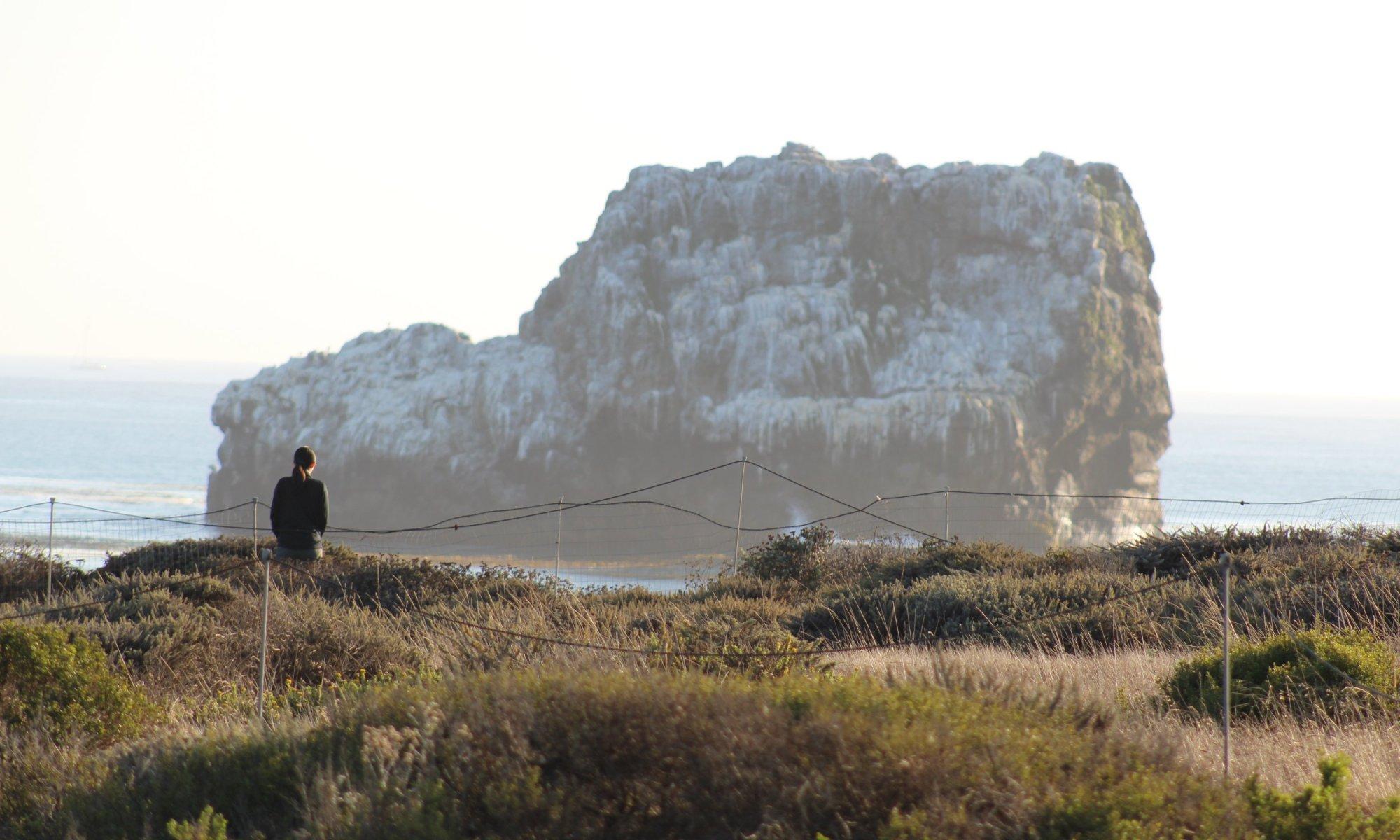 Piedras Blancas in San Simeon - Pacific Coast Highway