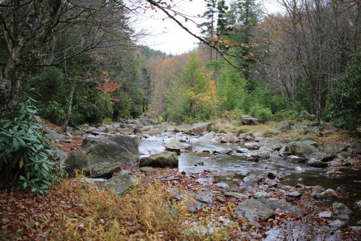Near the Red Creek Fork - 10-10-2020