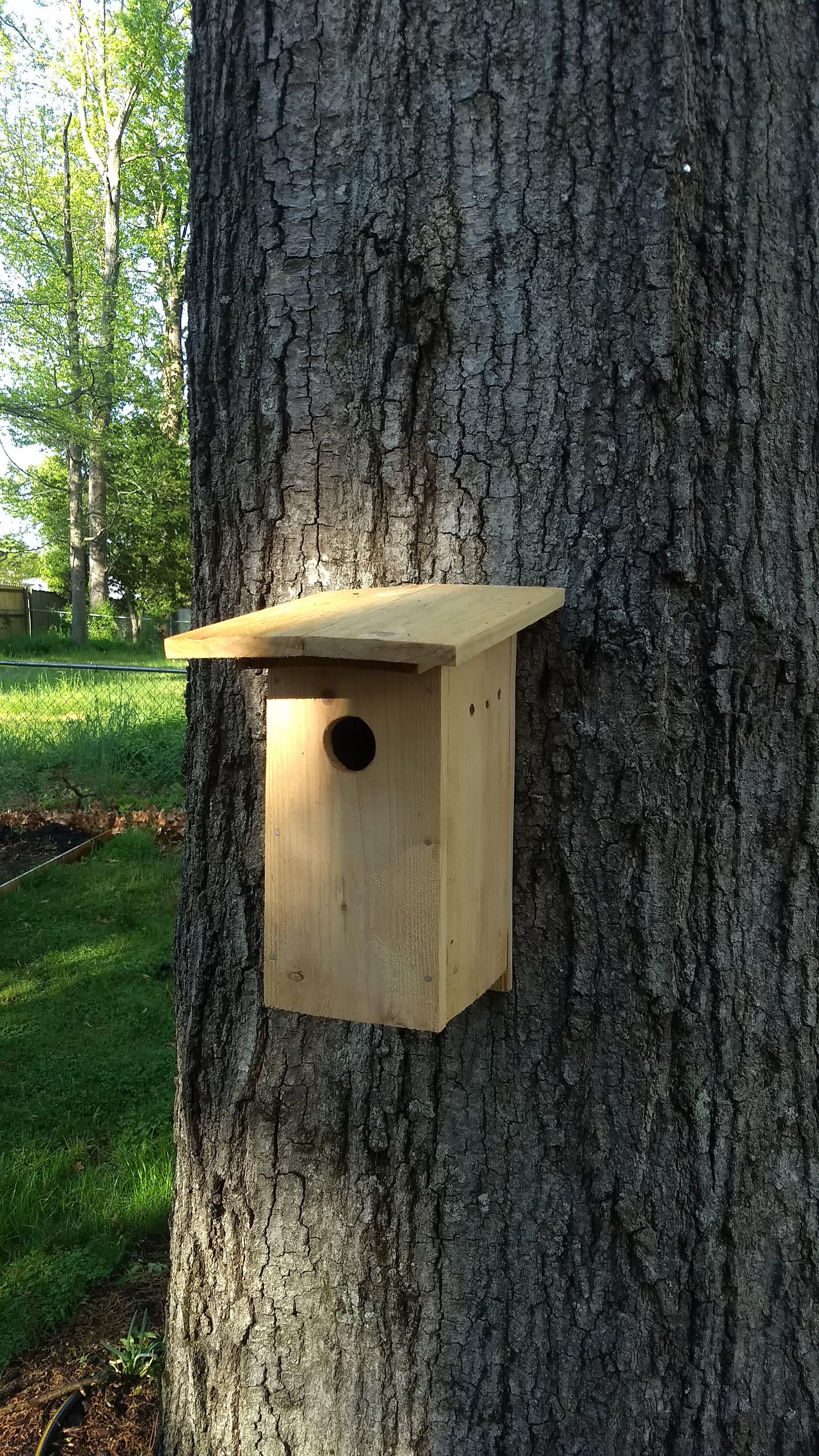 Nestbox 2.0