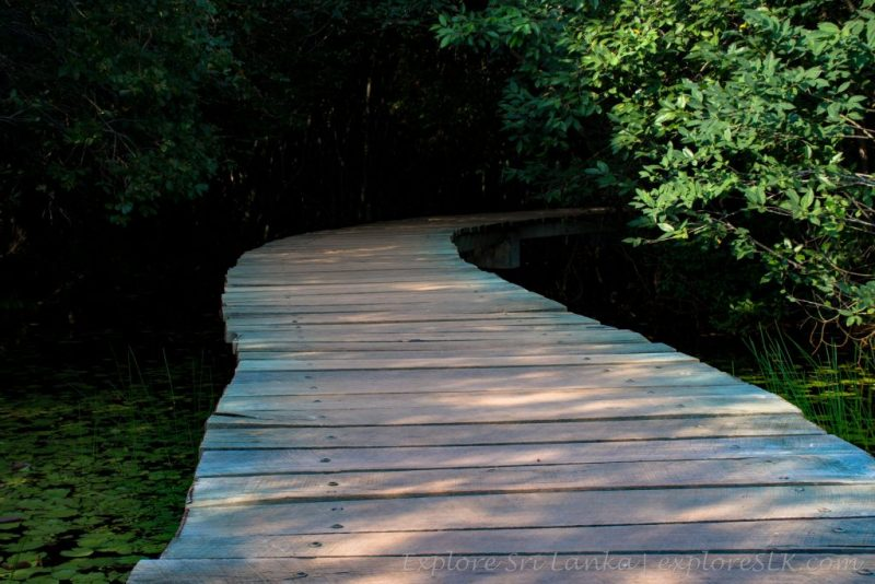 Wooden footpaths in park