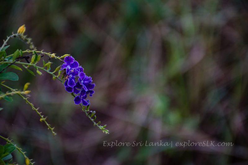 amazing flower macro photograph