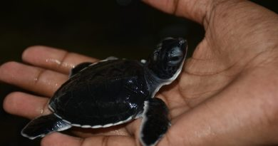 Turtle Hatcheries in Sri Lanka