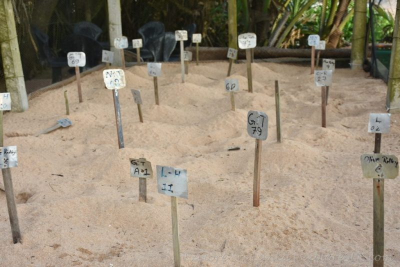 Artificial Sea Turtle nests