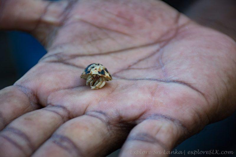 Hermit Crab on hand