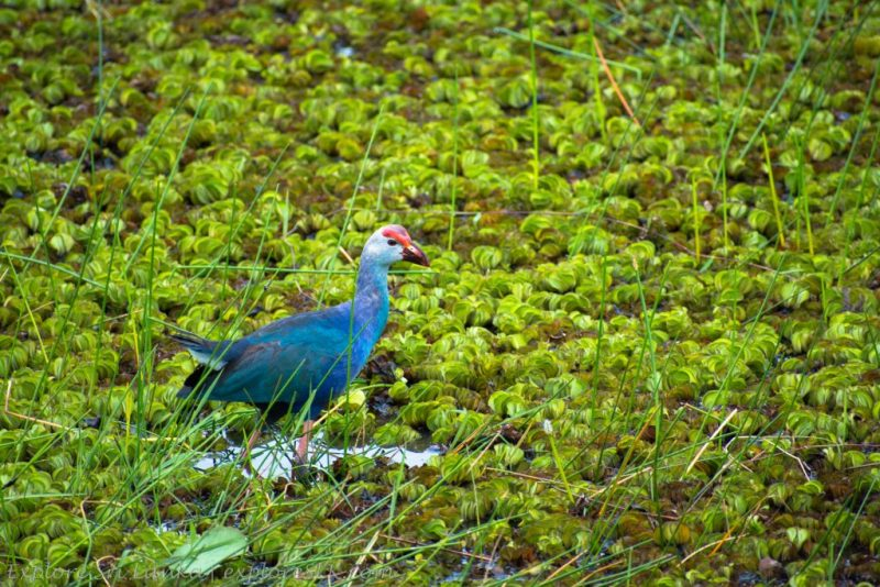 Birds at Diyasaru Park