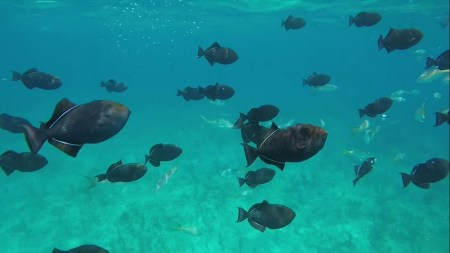 fish while scuba diving