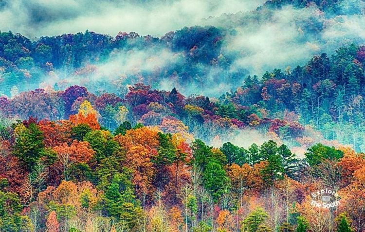 Great Smoky Mountains tree tops with haze in Fall