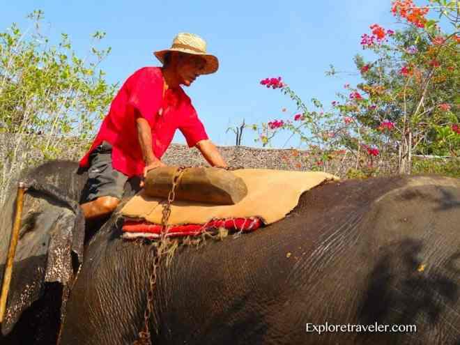 Thailand's Magnificent Elephants