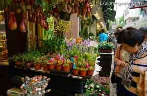 Mong Kok flower market Hong Kong
